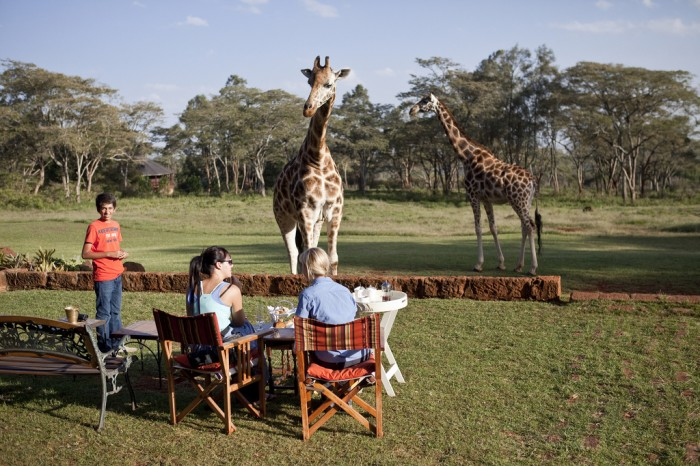 Stay-In-Hotel-Giraffe-Manor-Kenya-07